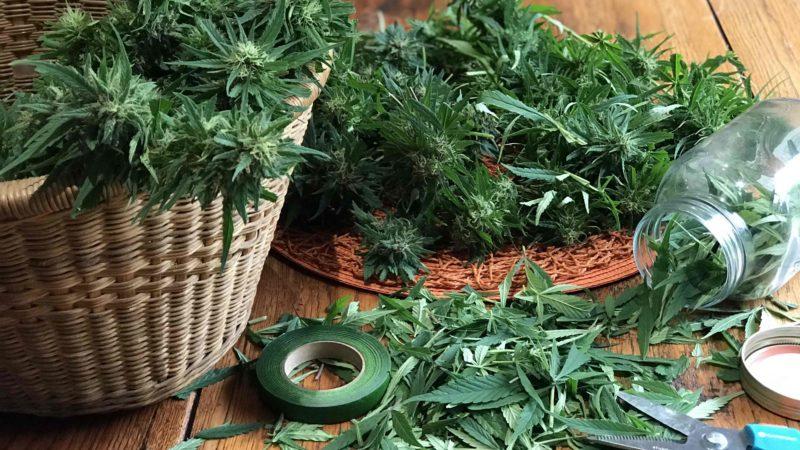 Investissements sur le cannabis légal : quels sont les risques et les opportunités?